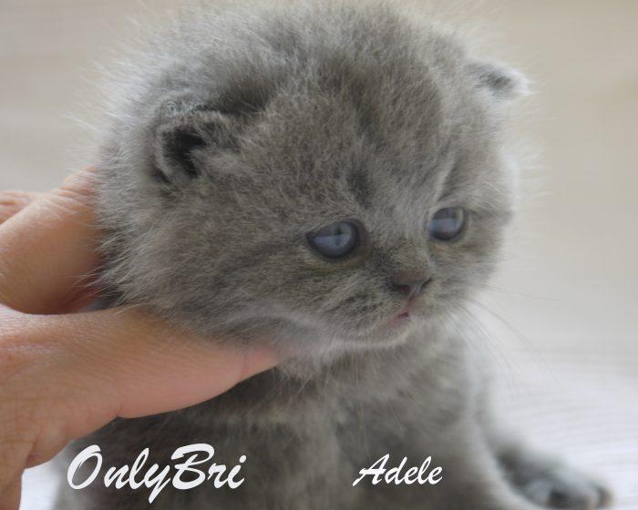 Adele-3w2