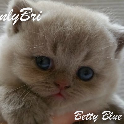 Betty-Blue1