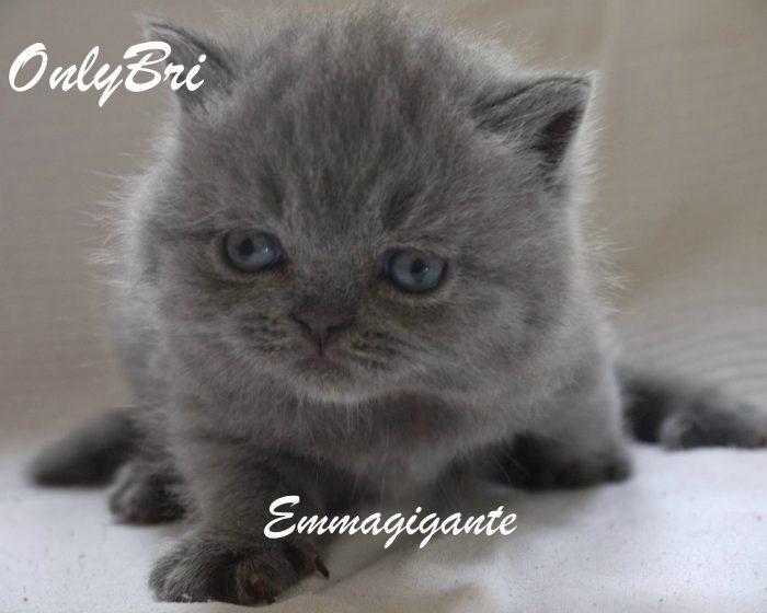 Emmagigante-4w2