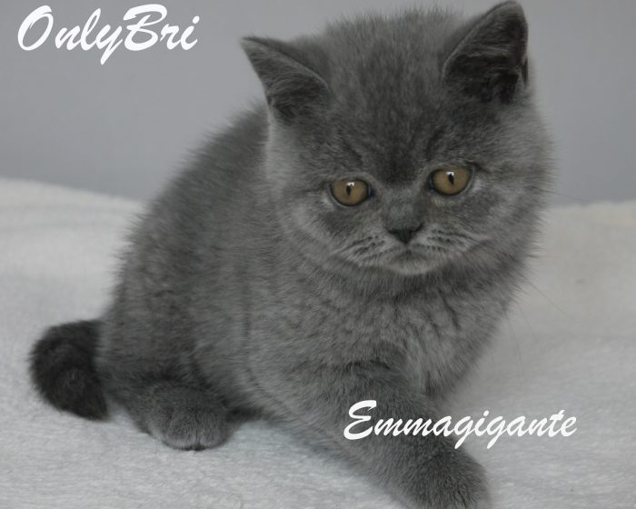 Emmagigante-9w1