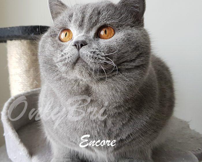 Encore-1y