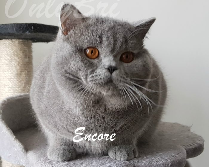 Encore-1y1
