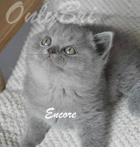 Encore-6w