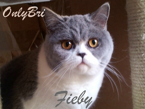 Fieby6