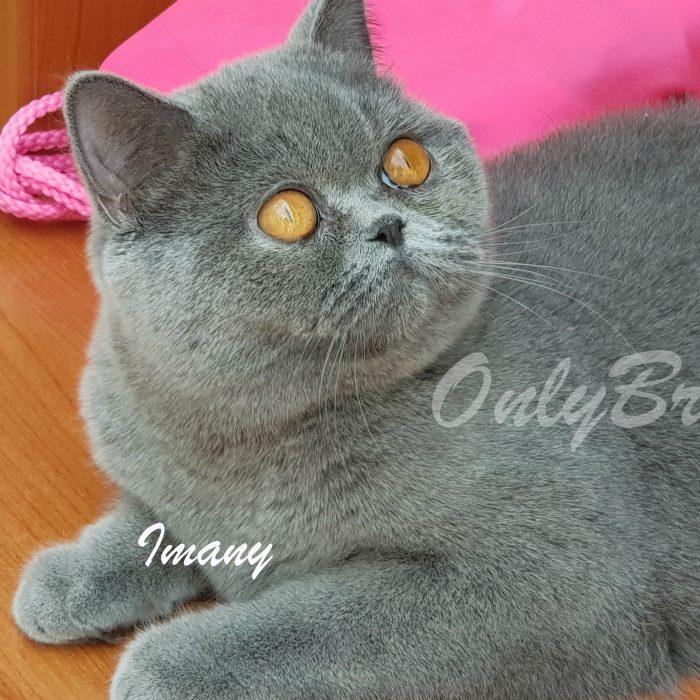 Imany-5