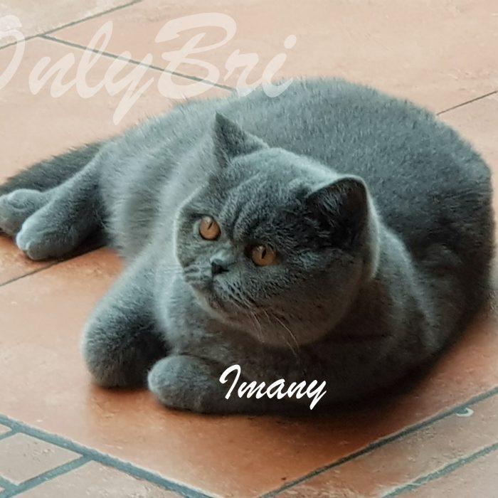 Imany-6