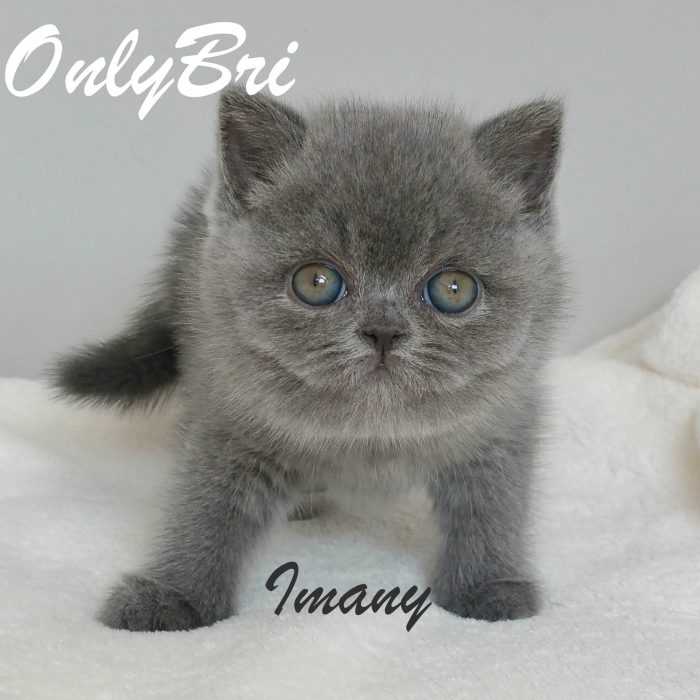 Imany-6w2