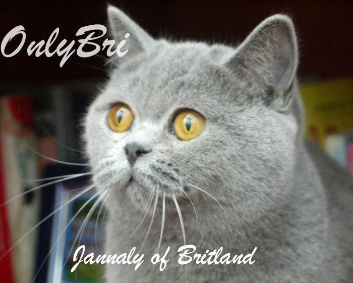 Jannaly-4