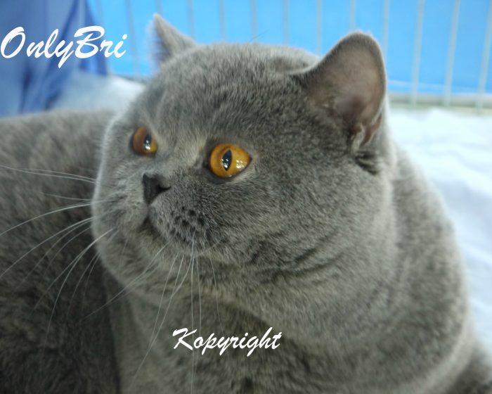 Kopy-41