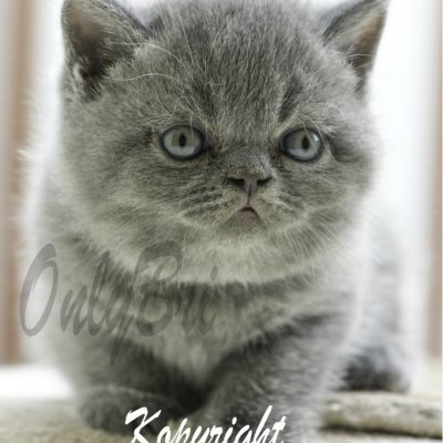 Kopyright-6w