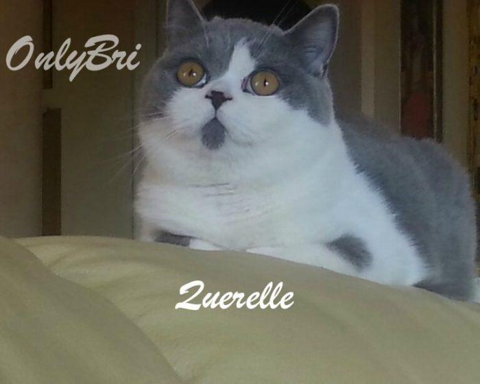 Querelle-marzo-2014-8