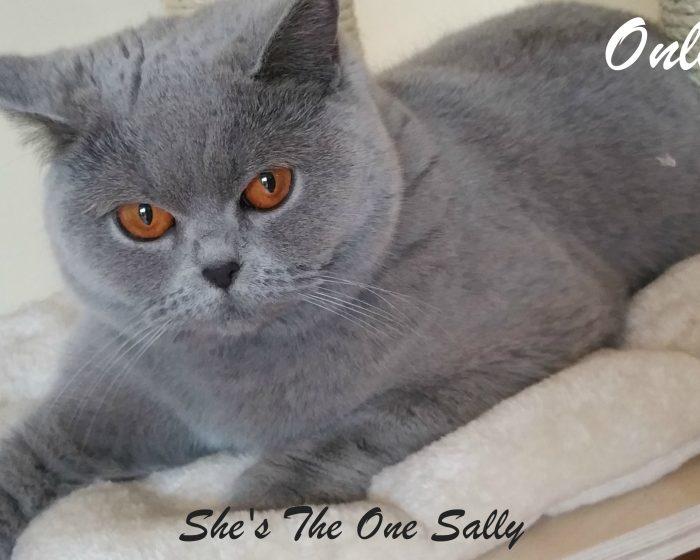 Sally-gennaio-2016
