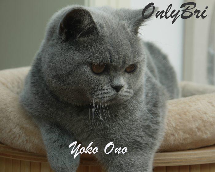 Yoko-Ono-2