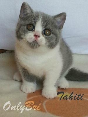 2-Tahiti-8w