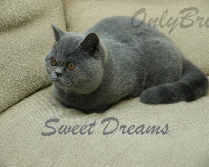 Sweet-Dreams-1
