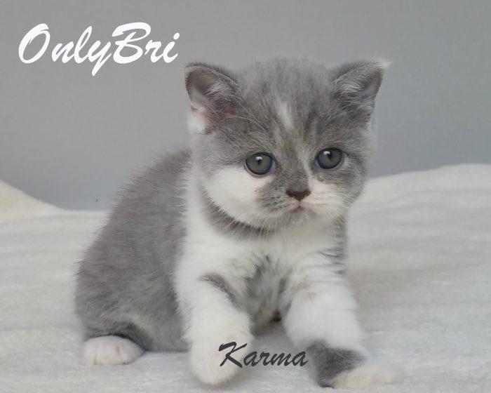 Karma 6w