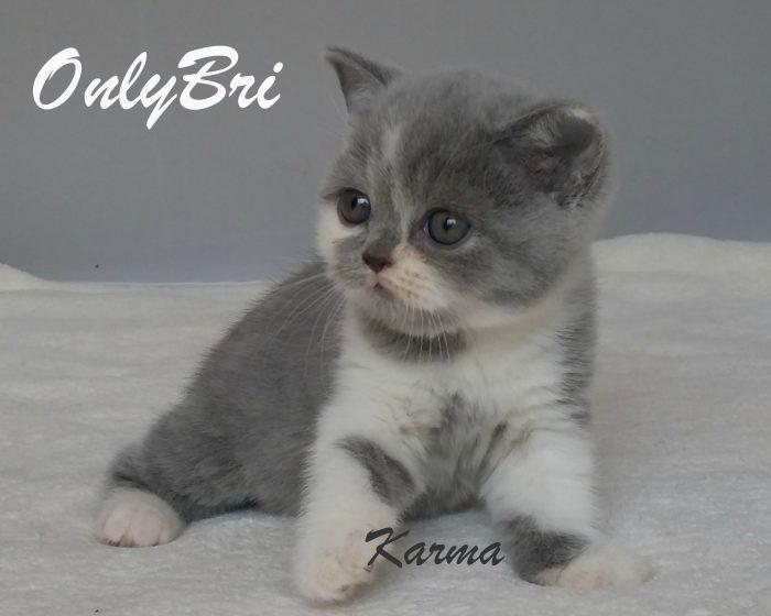Karma 6w1