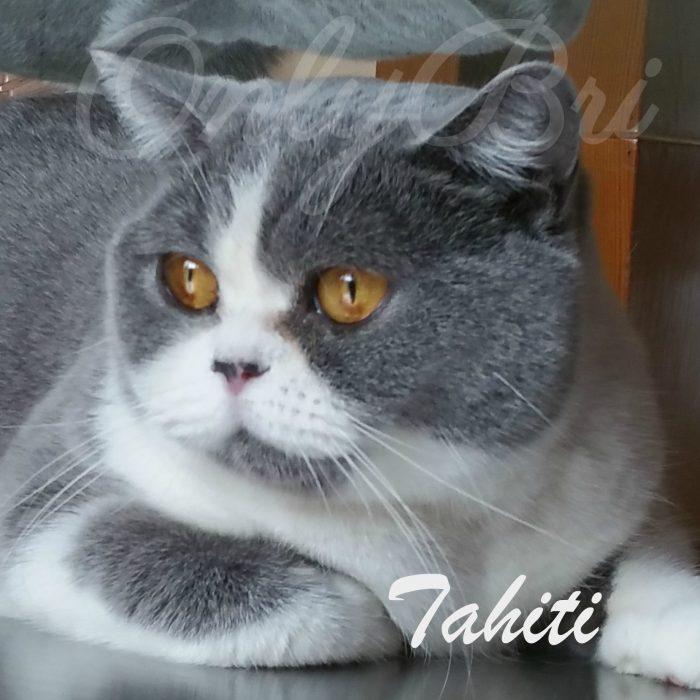 Tahiti dicembre 2016