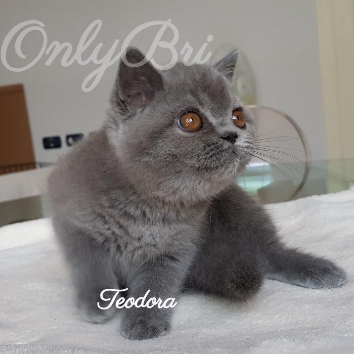 Teodora 3m3