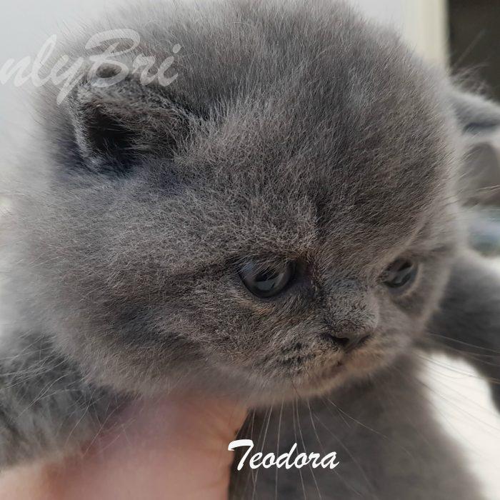 Teodora 4w1
