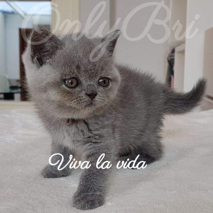 Viva la vida 6w1