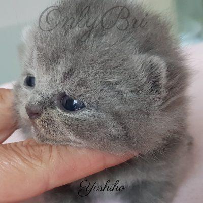 Yoshiko 2w
