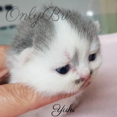 Yuki 2w
