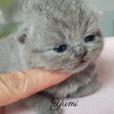 Yumi 2w