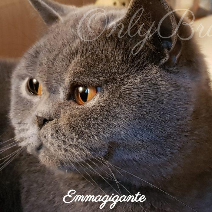 Emmagigante 4