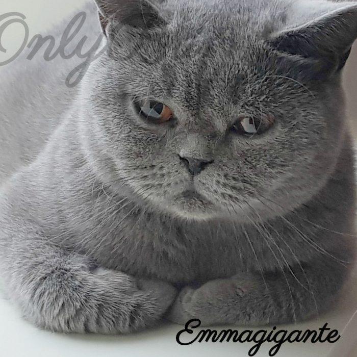 Emmagigante