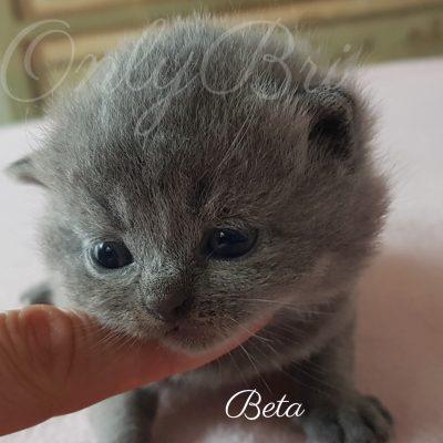 Beta 2w