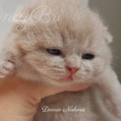 Daario Naharis 2w