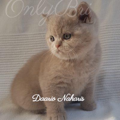 Daario Naharis 5w
